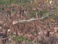 A Festa do Mastro é uma das mais populares de Sergipe