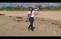 Sargaços em praias de Aracaju assusta banhistas