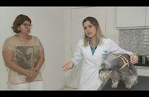 Especialista faz alerta sobre diabetes em cães e gatos