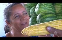 Conheça a história do milho