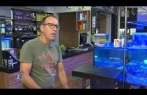 Aprenda como montar um aquário
