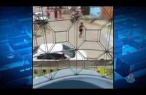 Vídeo enviado por telespectador mostra tiroteio no bairro Bugio