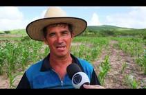 Conheça o processo de plantio do milho - Bloco 1