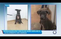 ONG Elan reinaugura e deseja ampliar o acolhimento aos animais