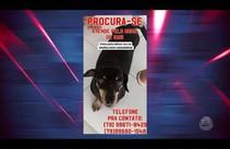 Cão está perdido e família pede ajuda