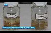 Quatro bairros de Aracaju registram surto de escorpiões
